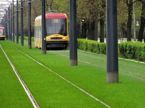 19 Трамвай юлларындагы газон